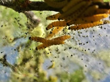 get rid of pests