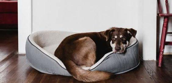 dog floor