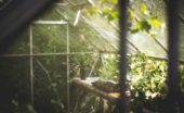 building greenhouse