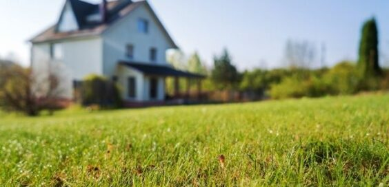 How To Turn Your Yard Into a Drought-Resistant Landscape